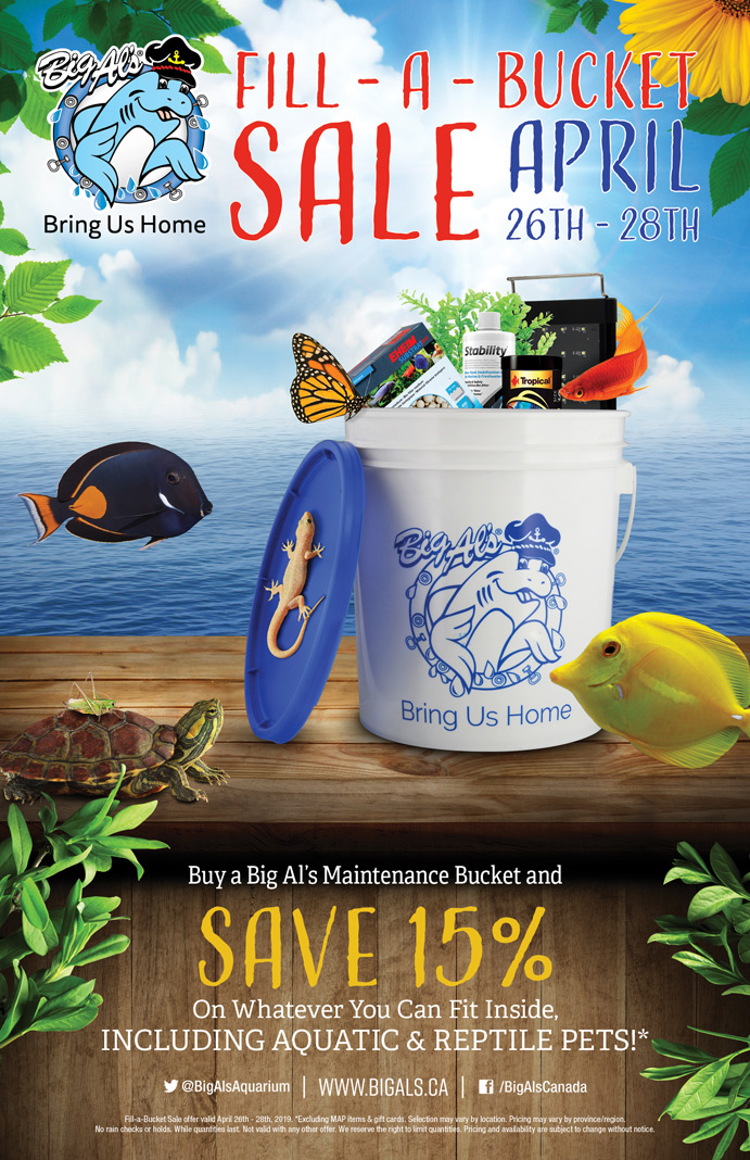 Fill a Bucket Sale Spring 2019