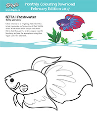February Monthly Download