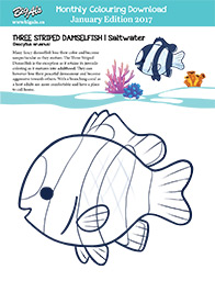January Monthly Download